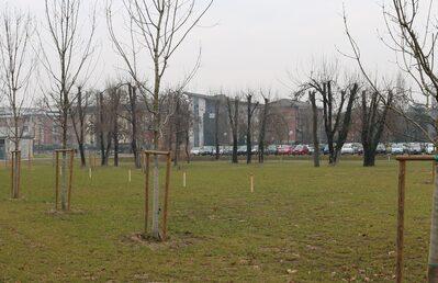 Ogni palo corrisponde a un albero che verrà piantato